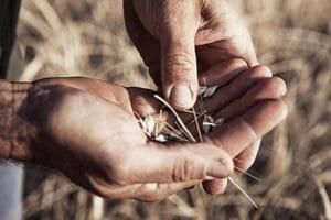 nuova riforma agraria