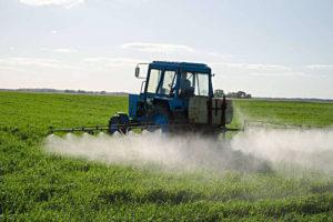 Analisi del Piano di rigenerazione olivicola in Puglia